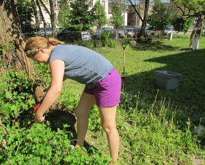 Corrine tackles 4 foot high weeds.