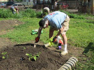 Mike plants more veggies