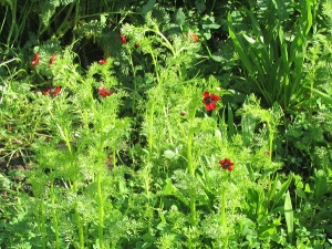 Beautiful red flowers in the sun garden.