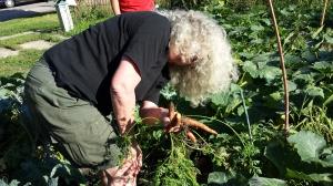 Kathleen wrangling carrots